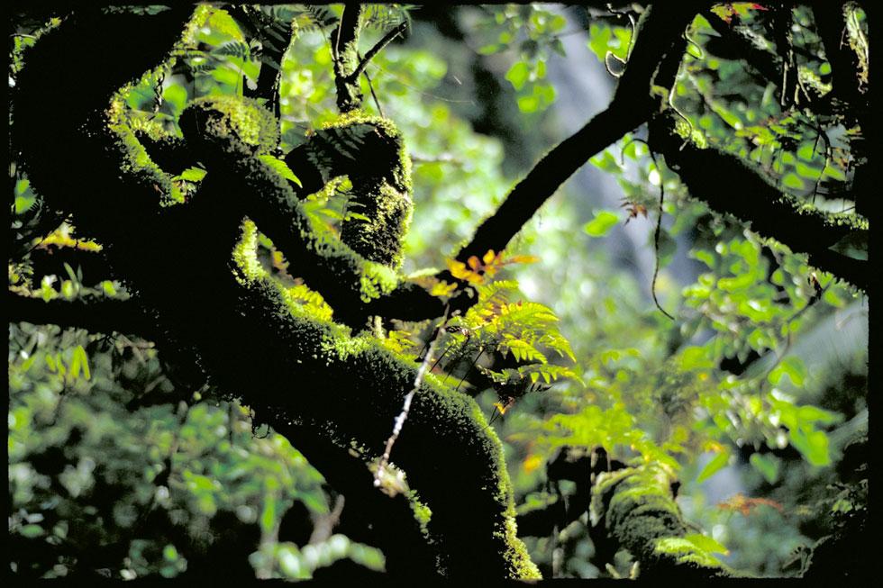 Rich jungle vegetation